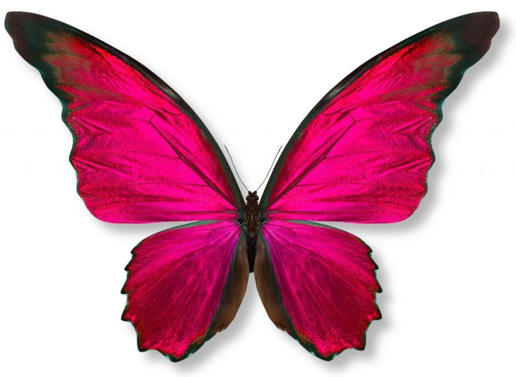 symmetrical butterfly